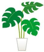 植物、飾りました